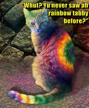 """Whut? Yu never saw ah                                    rainbow tabby                                                  before?"""
