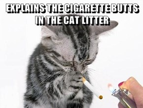 EXPLAINS THE CIGARETTE BUTTS IN THE CAT LITTER