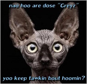 "nao hoo are dose ""Greyz""  yoo keep tawkin bout hoomin?"