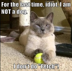 "For the last time, idiot. I am NOT a dog.  I don't do ""Fetch""!"