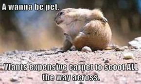 A wanna be pet.  Wants expensive carpet to scoot ALL the way across.