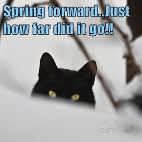 Spring forward..Just how far did it go!!
