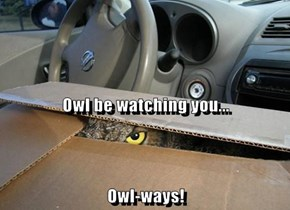 Owl be watching you... Owl-ways!