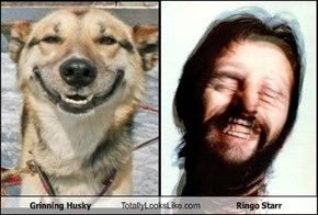 Grinning Husky Totally Looks Like Ringo Starr