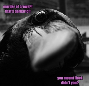 Slow Crow Is Slow