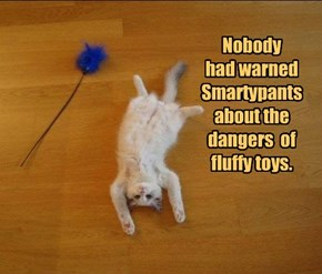 Nobody  had warned Smartypants about the dangers  of fluffy toys.
