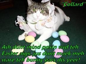 """""""Collard""""  Aih dunt mind posin wid teh Easter aigs, jus dunt maek meh ware teh bunny ears dis yeer!"""