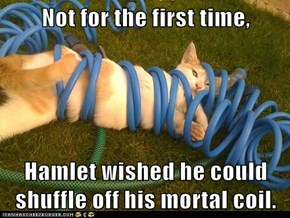 Not for the first time,  Hamlet wished he could shuffle off his mortal coil.