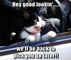 Hey good lookin'.....  we'll be back to                                         pick you up later!!