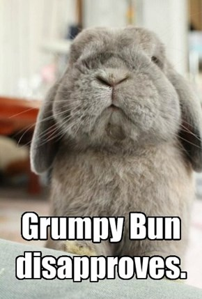 Grumpy Bun disapproves.