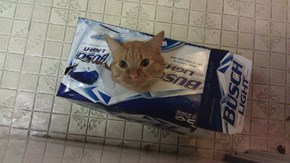 Dammit, the Cat Drank All the Beer