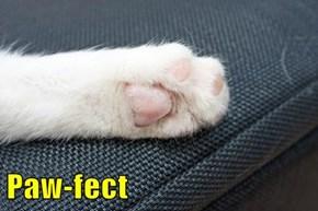 Paw-fect