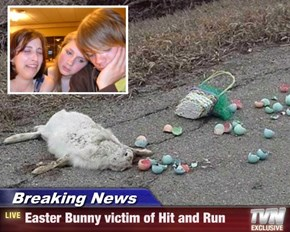 Breaking News - Easter Bunny victim of Hit and Run