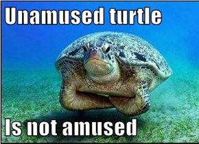 Unamused turtle  Is not amused