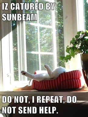 IZ CATURED BY SUNBEAM  DO NOT, I REPEAT, DO NOT SEND HELP.
