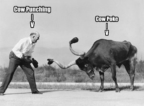 Cow Punching | V