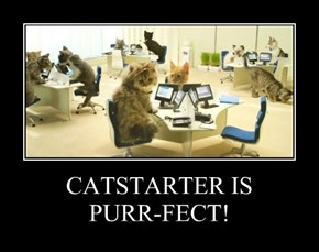 CATSTARTER IS  PURR-FECT!