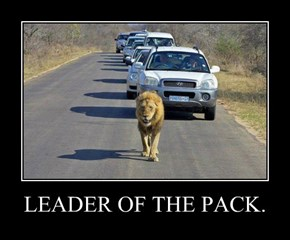LEADER OF THE PACK.
