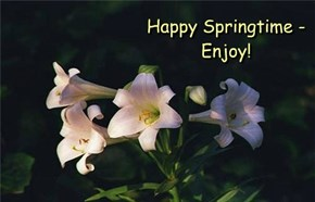 Happy Springtime - Enjoy!