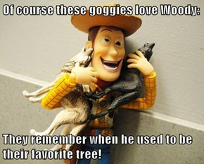 Of course these goggies love Woody:  They remember when he used to be their favorite tree!