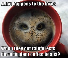 What happens to the birds  When they cut rainforests down to plant coffee beans?