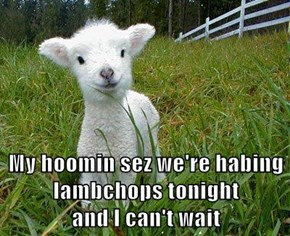 My hoomin sez we're habing lambchops tonight                             and I can't wait