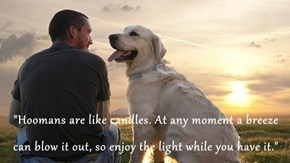 """Hoomans are like candles. At any moment a breeze can blow it out, so enjoy the light while you have it."""