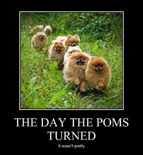 THE DAY THE POMS TURNED