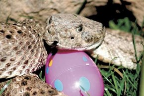 Easter Egg Hunt Warning
