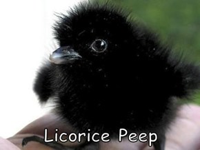 Licorice Peep