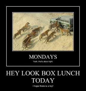 HEY LOOK BOX LUNCH TODAY