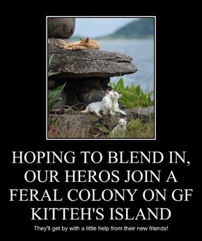 HOPING TO BLEND IN, OUR HEROS JOIN A FERAL COLONY ON GF KITTEH'S ISLAND