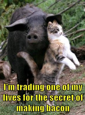 I'm trading one of my lives for the secret of making bacon