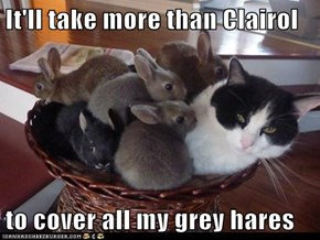 It'll take more than Clairol   to cover all my grey hares