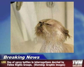 Breaking News - Use of spray bottles in interrogations decried by Feline Rights Groups.  (Warning: Graphic images)