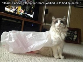 Your Cat?  He Had to Run to the Store...