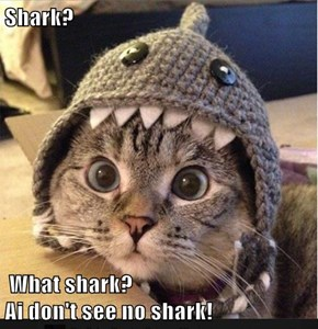 Shark?                 What shark?                                                      Ai don't see no shark!