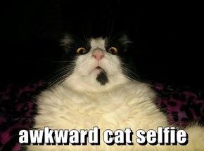 awkward cat selfie