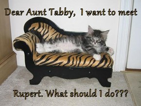 Dear Aunt Tabby,  I want to meet   Rupert. What should I do???