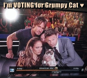 I'm VOTING for Grumpy Cat ♥