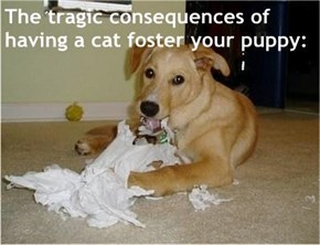 The tragic consequences of having a cat foster your puppy: