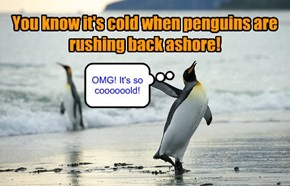 You know it's cold when penguins are rushing back ashore!