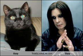 Ozzy Totally Looks Like Ozzy