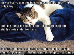 i'm very sorry that boo boo went over the rainbow, if i helps any... i bet my tigger is showing her the best trees to find shady spots under for naps i'm sure patches is showing her all the best spots for pouncing on butterflies, and where the nip sqwerls