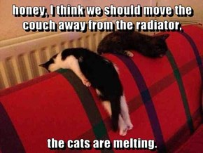 honey, I think we should move the couch away from the radiator,  the cats are melting.