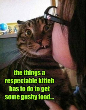 the things a respectable kitteh has to do to get some gushy food...