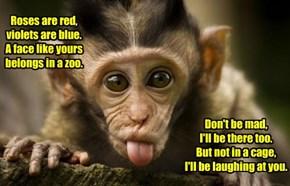 Sassy Monkey Is Sassy