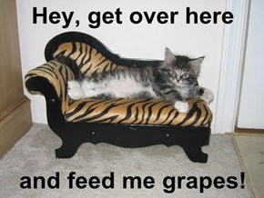 Hey, get over here  and feed me grapes!