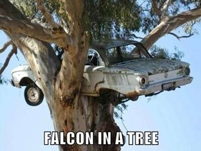 FALCON IN A TREE