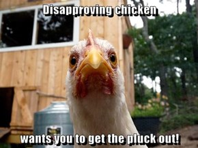 Disapproving chicken  wants you to get the pluck out!